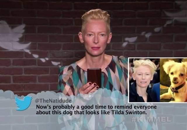 Photo caption - @TheNatidude Now's probablya good time to remind everyone about this dog that looks like Tilda Swinton. #KIMMEL