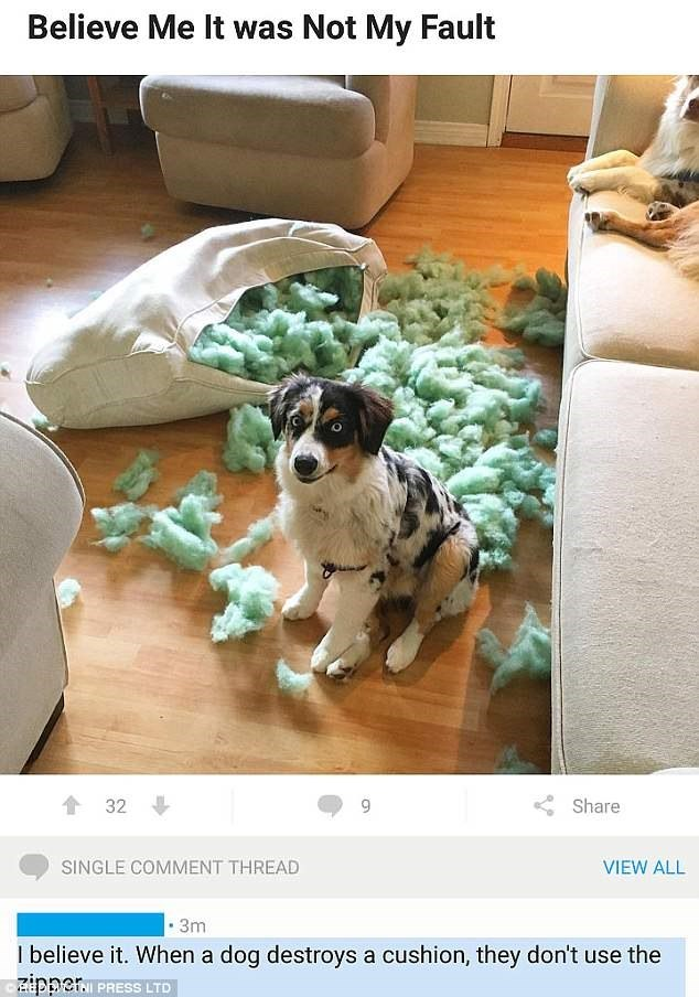 Dog - Believe Me It was Not My Fault 32 Share SINGLE COMMENT THREAD VIEW ALL 3m I believe it. When a dog destroys a cushion, they don't use the zipper PRESS LTD