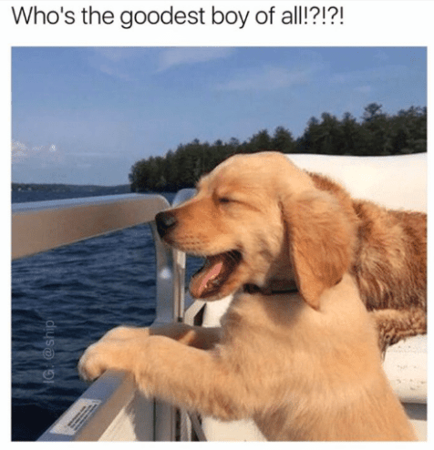 Dog - Who's the goodest boy of all!?!?! G @ship