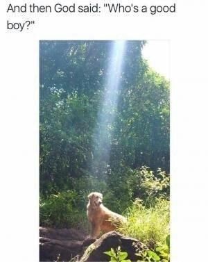 """Nature - And then God said: """"Who's a good boy?"""""""