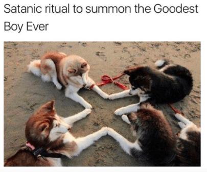 Canidae - Satanic ritual to summon the Goodest Boy Ever