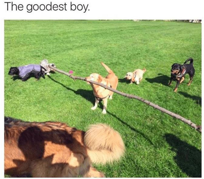 Grass - The goodest boy.