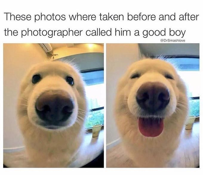 Mammal - These photos where taken before and after the photographer called him a good boy @DrSmashlove