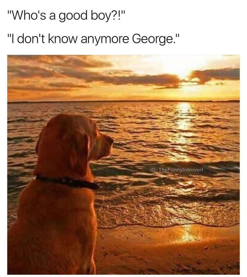 """Dog - """"Who's a good boy?!"""" """"I don't know anymore George."""" IG: TheFunnylntrovert"""