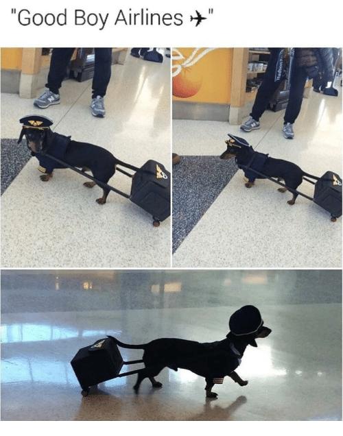 "Dog - ""Good Boy Airlines"""