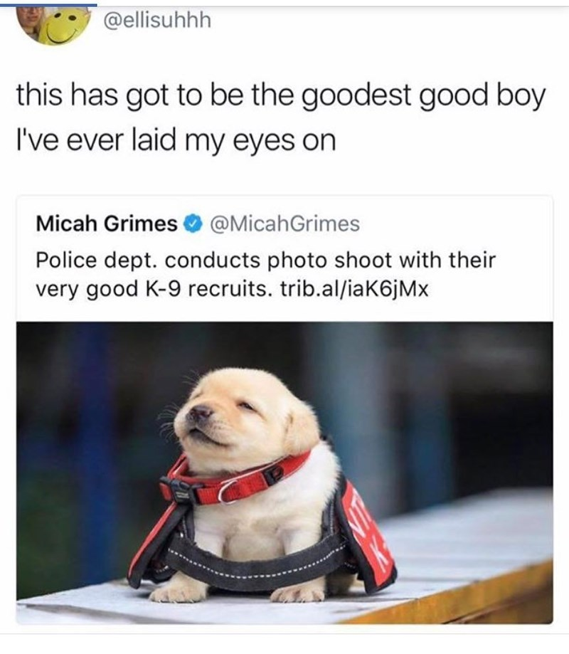Dog - @ellisuhhh this has got to be the goodest good boy I've ever laid my eyes on Micah Grimes @MicahGrimes Police dept. conducts photo shoot with their very good K-9 recruits. trib.al/ia K6j Mx