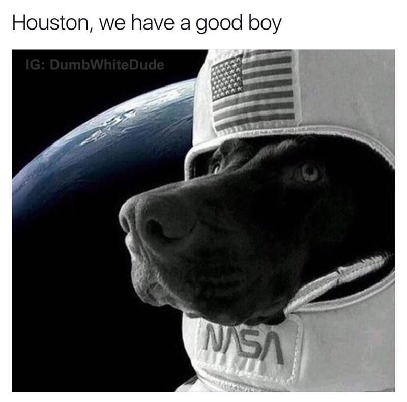 Canidae - Houston, we have a good boy IG: DumbWhiteDude NSA