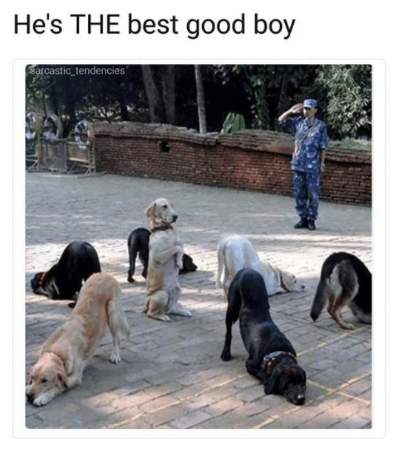 Dog - He's THE best good boy Sarcastic tendencies