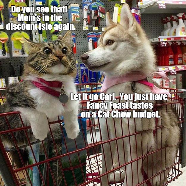 let it go carl lolcats lol cat memes funny cats funny