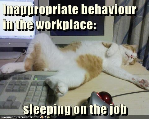 Funny Sleeping Meme : Sleeping on the job lolcats lol cat memes funny cats