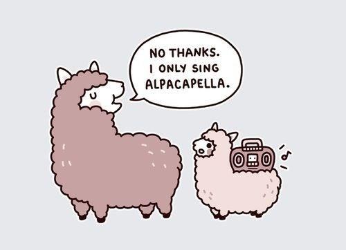 meme about alpacas only singing 'alpacapella'