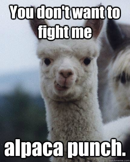 meme about an alpaca that will punch you