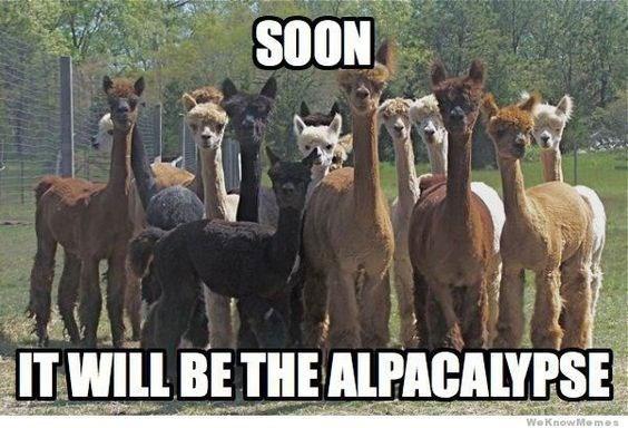 "meme about alpacas starting an ""alpacalypse"""