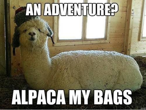 meme about an alpaca going to pack its bags