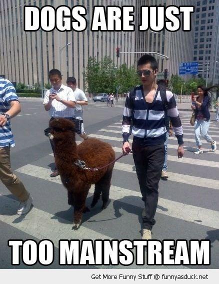 meme about having an alpaca as a pet instead of a dog