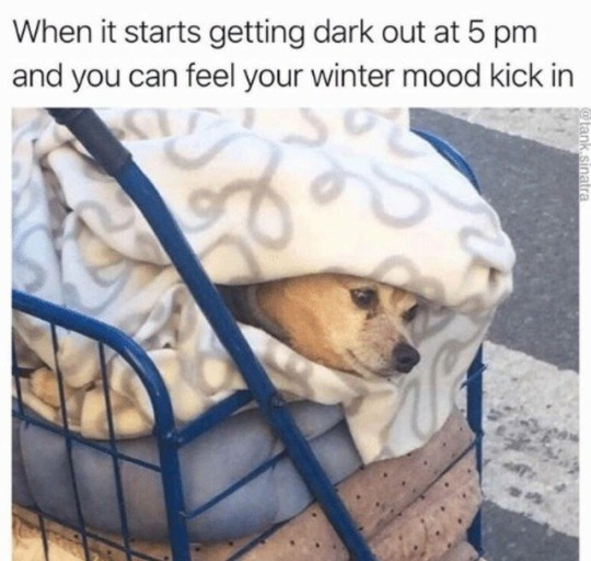 Canidae - When it starts getting dark out at 5 pm and you can feel your winter mood kick in @tank.sinatra