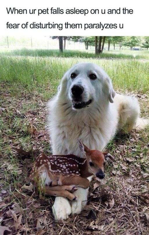 Mammal - When ur pet falls asleep on u and the fear of disturbing them paralyzes