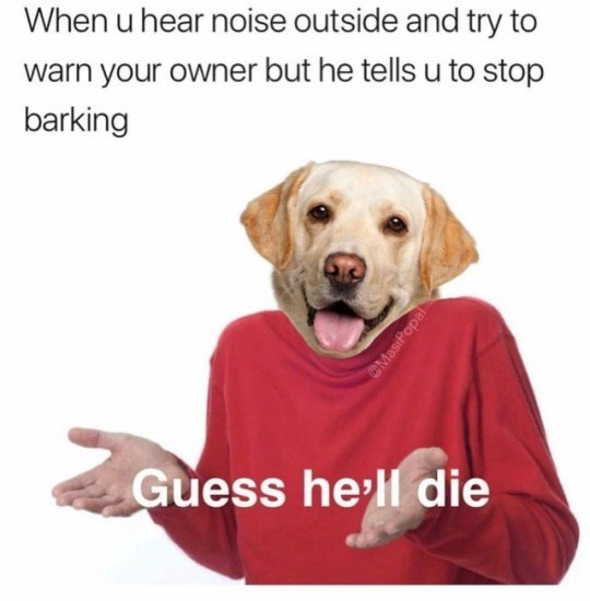 Canidae - When u hear noise outside and try to warn your owner but he tells u to stop barking Guess he'll die OMasiPopal