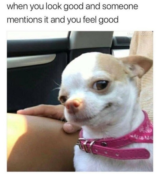 Dog - when you look good and someone mentions it and you feel good Chvioidpolice
