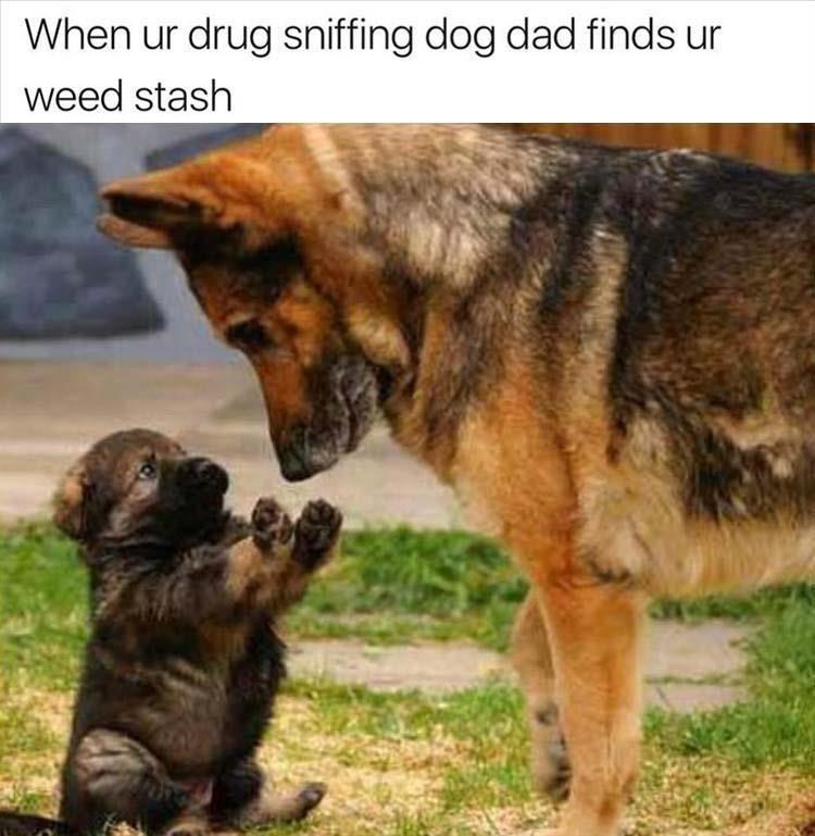 Mammal - When ur drug sniffing dog dad finds ur weed stash