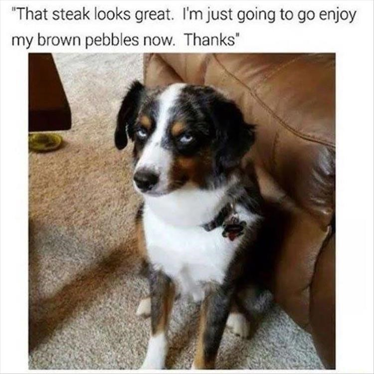 """Dog - """"That steak looks great. I'm just going to go enjoy my brown pebbles now. Thanks"""