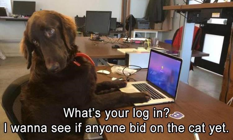 Dog - What's your log in? O wanna see if anyone bid on the cat yet.