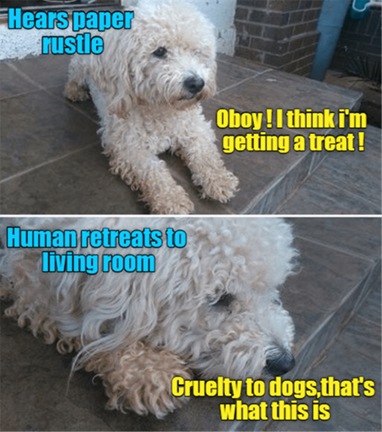 Dog - Hears paper rustle Oboy!I think i'm getting a treat! Human retreats to living room Cruelty to dogs,that's what this is