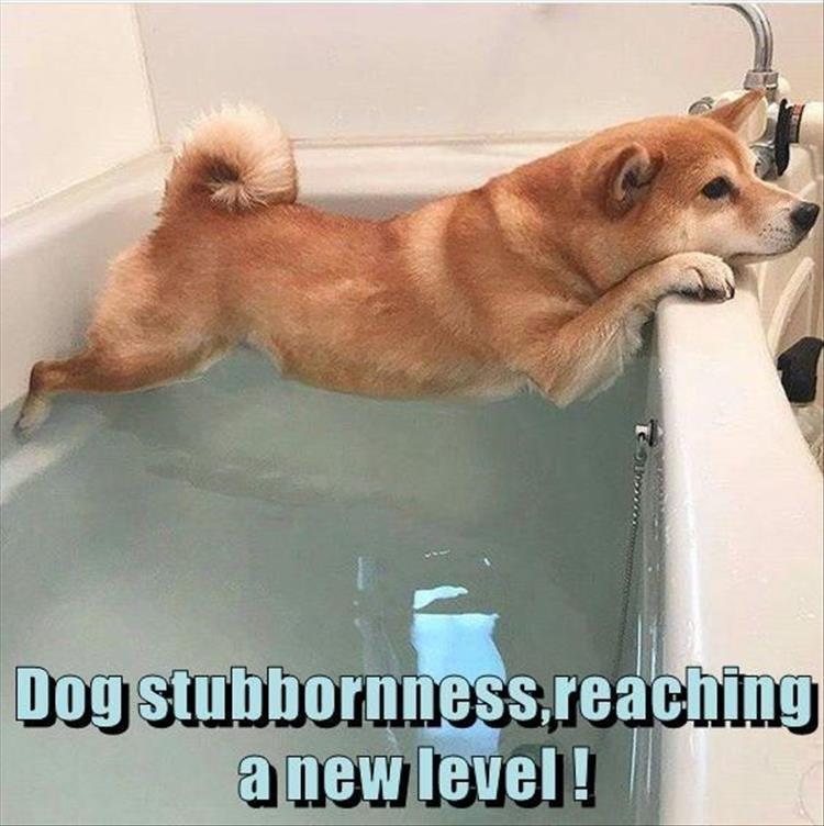 Dog - Dog stubbornness.reaching anew level!