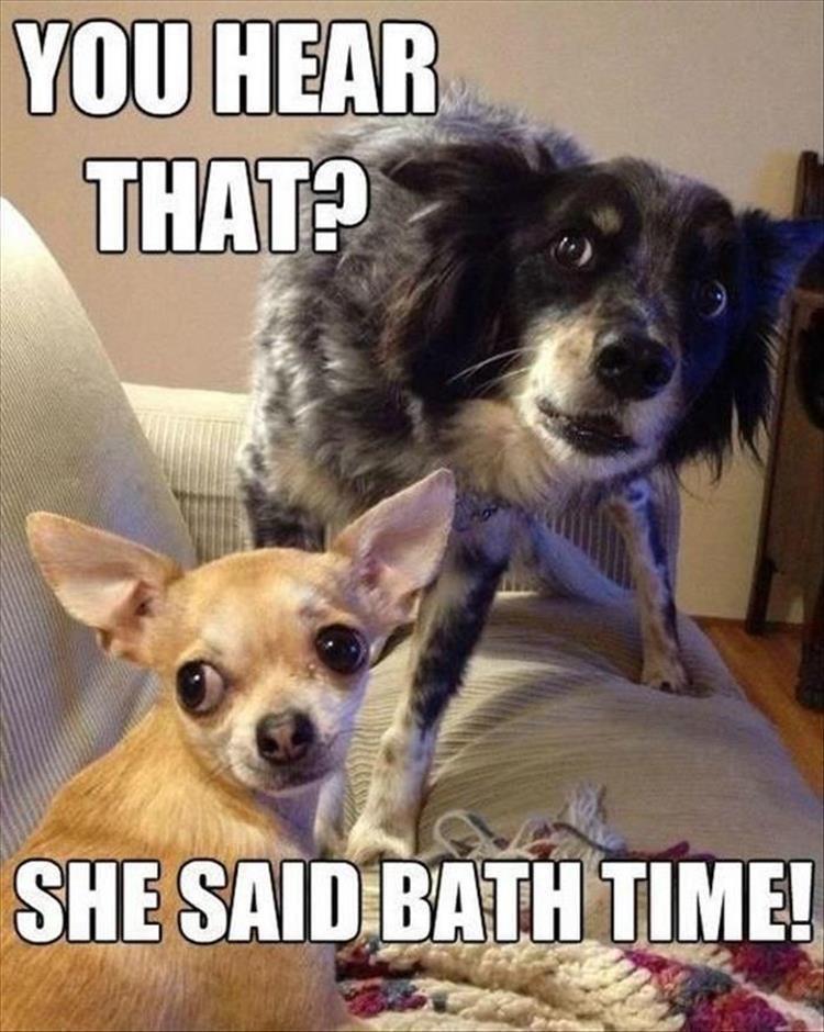 Dog - YOU HEAR THAT? SHE SAID BATH TIME!