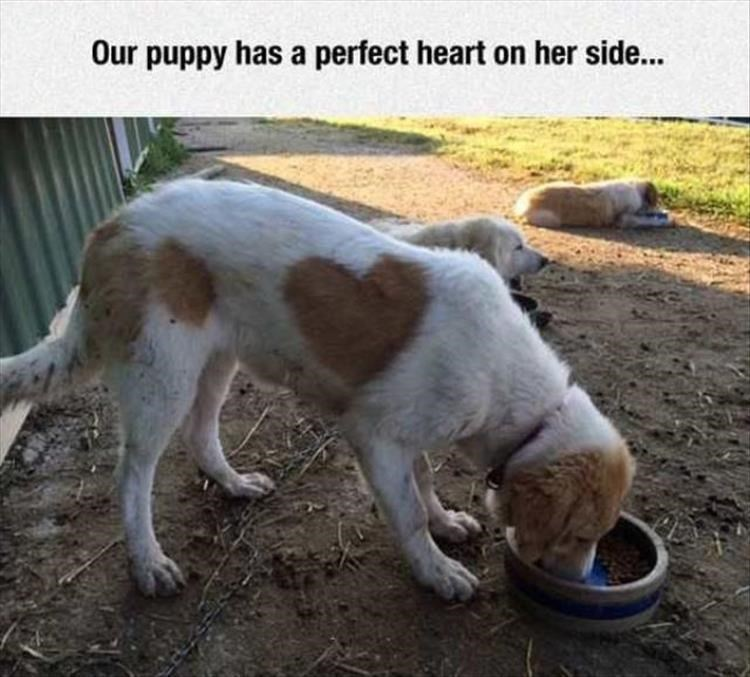Dog - Our puppy has a perfect heart on her side...