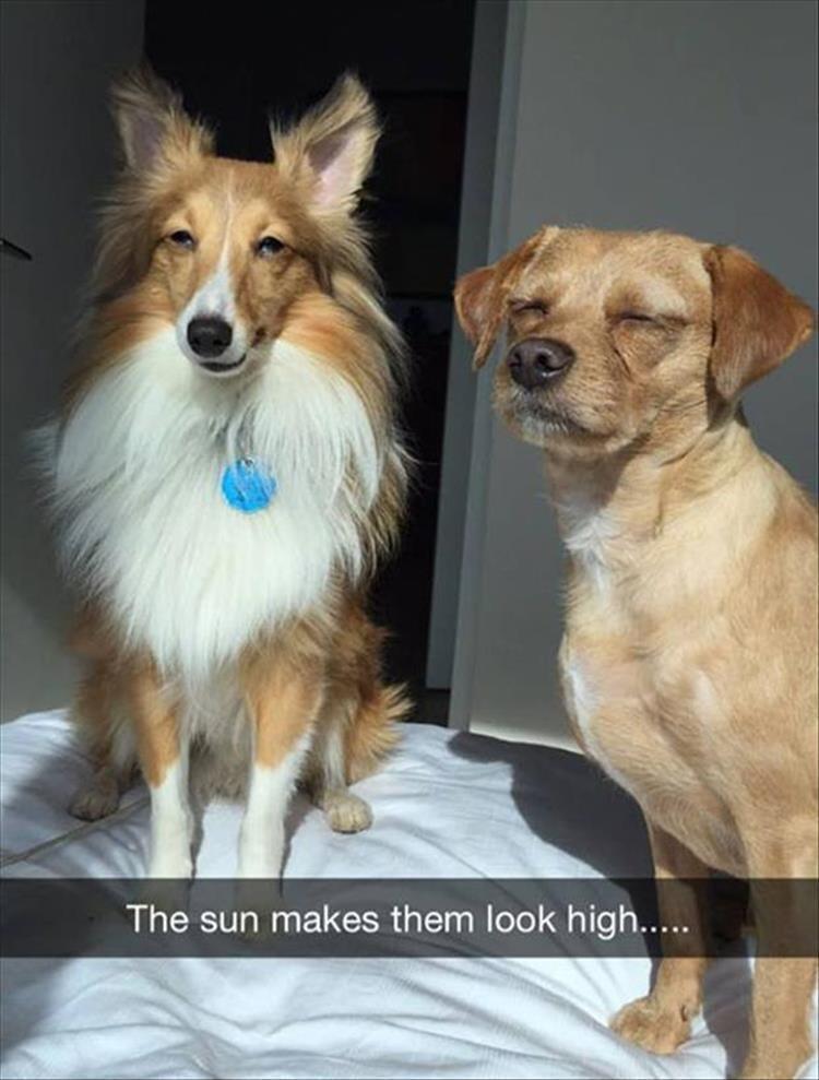 Dog - The sun makes them look high....