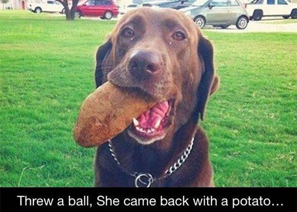 animal gifts - Dog - Threw a ball, She came back with a potato...