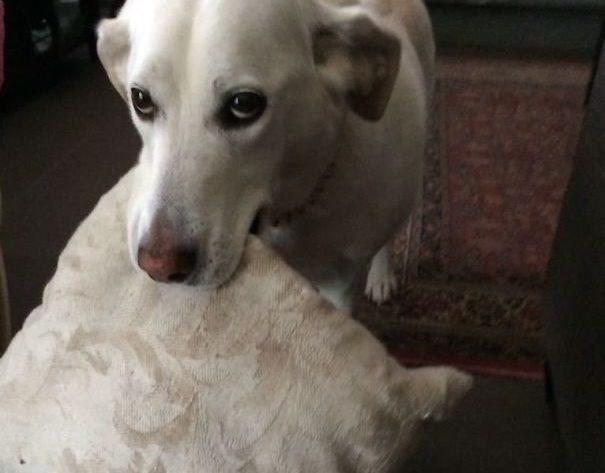 animal gifts - Dog breed