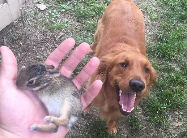 animal gifts - Dog