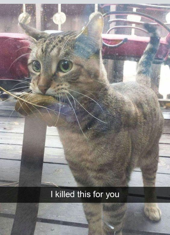 animal gifts - Cat - I killed this for you