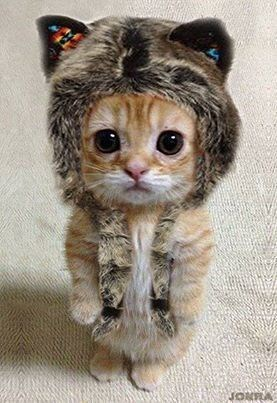 kitten wearing a furry hat while standing