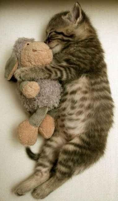 kitten hugging a stuffed sheep