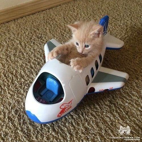 kitten sitting inside a toy plane