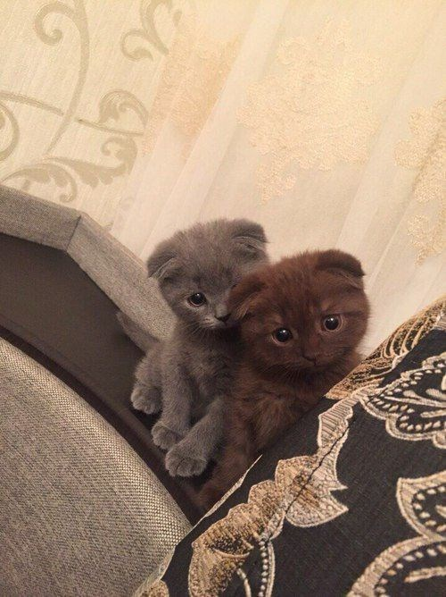 brown and grey kitten peaking behind a pillow