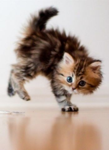 kitten scared and its back legs are off the ground