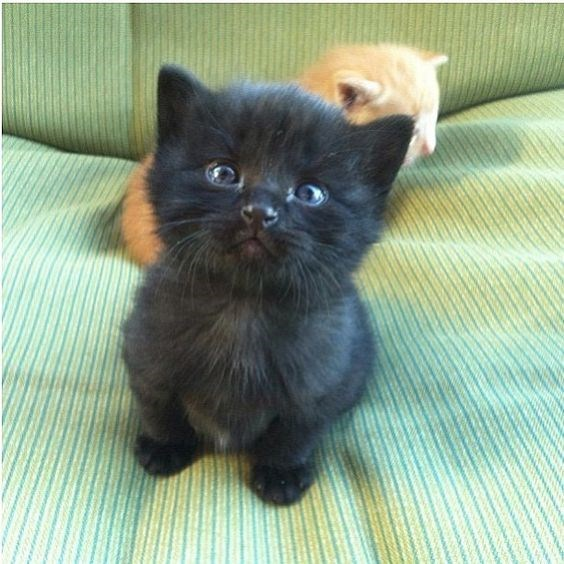 black cute kitten looking up at the camera