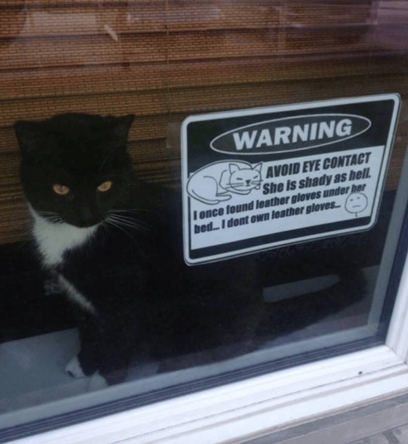 lol Cats funny - 9101860096