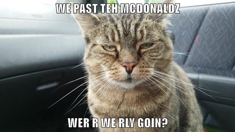 lolcats Cats funny - 9101861888
