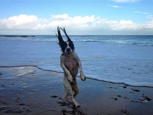 perfectly timed photo - Canidae