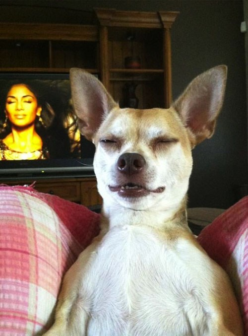 perfectly timed photo - Dog