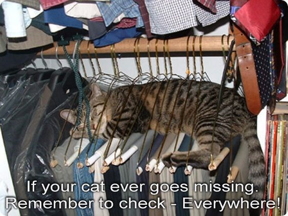 Cat - If your cat ever goes missing. Remember to check Everywhere!