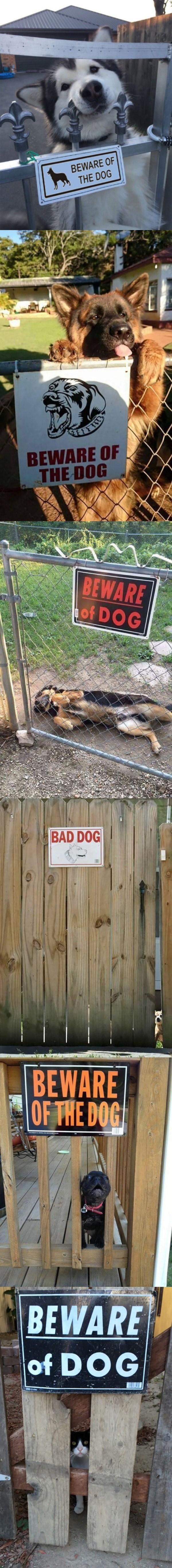 lista de perros tiernos junto a su letrero de tener cuidado con ellos