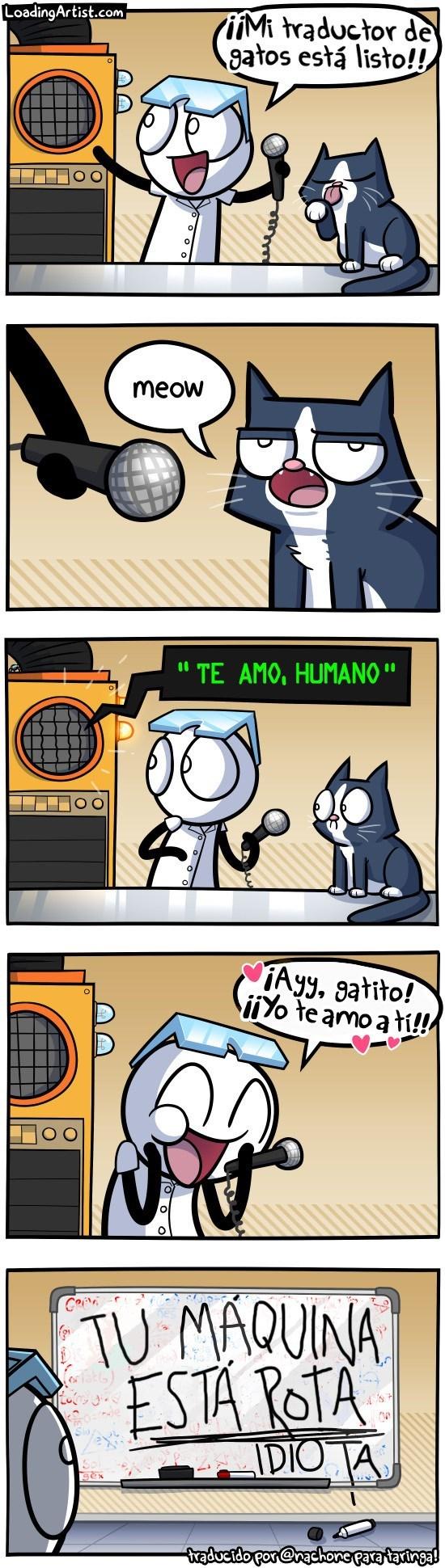 cuando crees que la maquina te va a traducir lo que dice tu gato