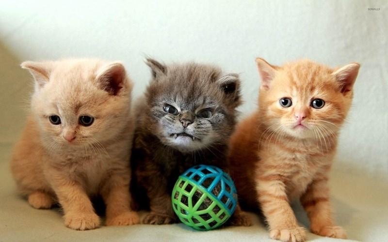Cat - SUWALLS