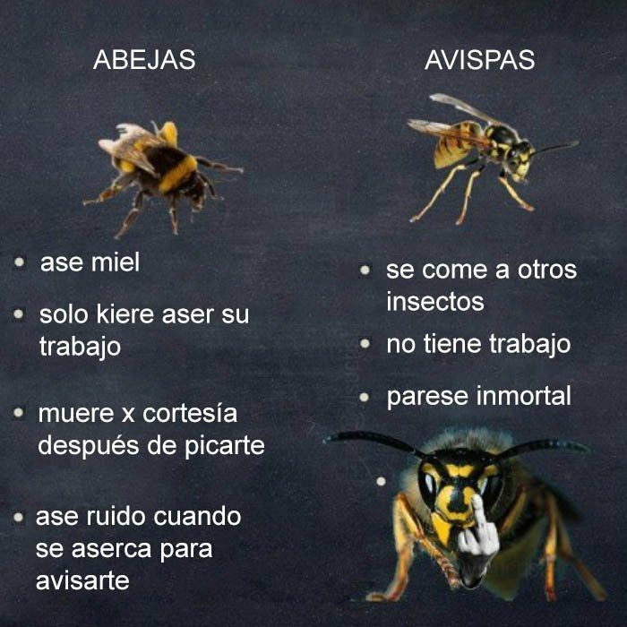 Cheezburger Image 9102395648